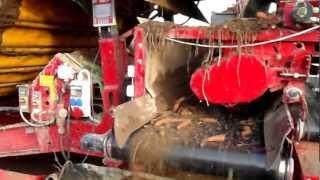 Załadunek skrzyniopalety do chłodnia marchwi linią GRIMME 10-11-12