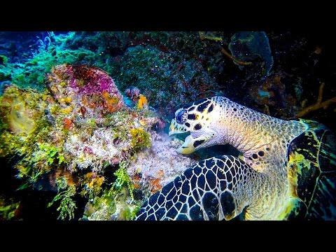 Cozumel Dive Trip May 2017