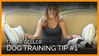 Tamar Geller Dog Training Tip #1