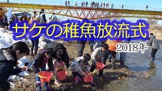 「鮭(サケ)の稚魚放流会」が「健康の森公園」を流れる村山高瀬川で開催 2018.3.4