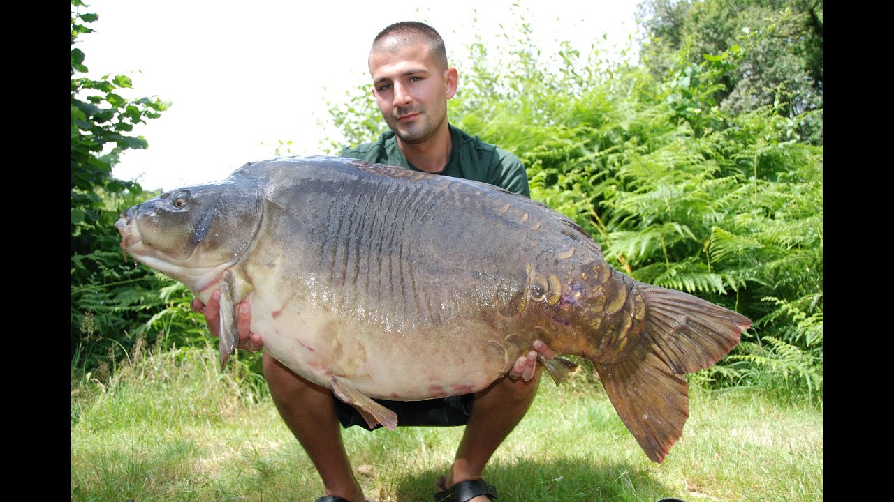 Carp fishing 64lbs 14oz mirror carp tops 30 fish haul from for Carp fish pictures