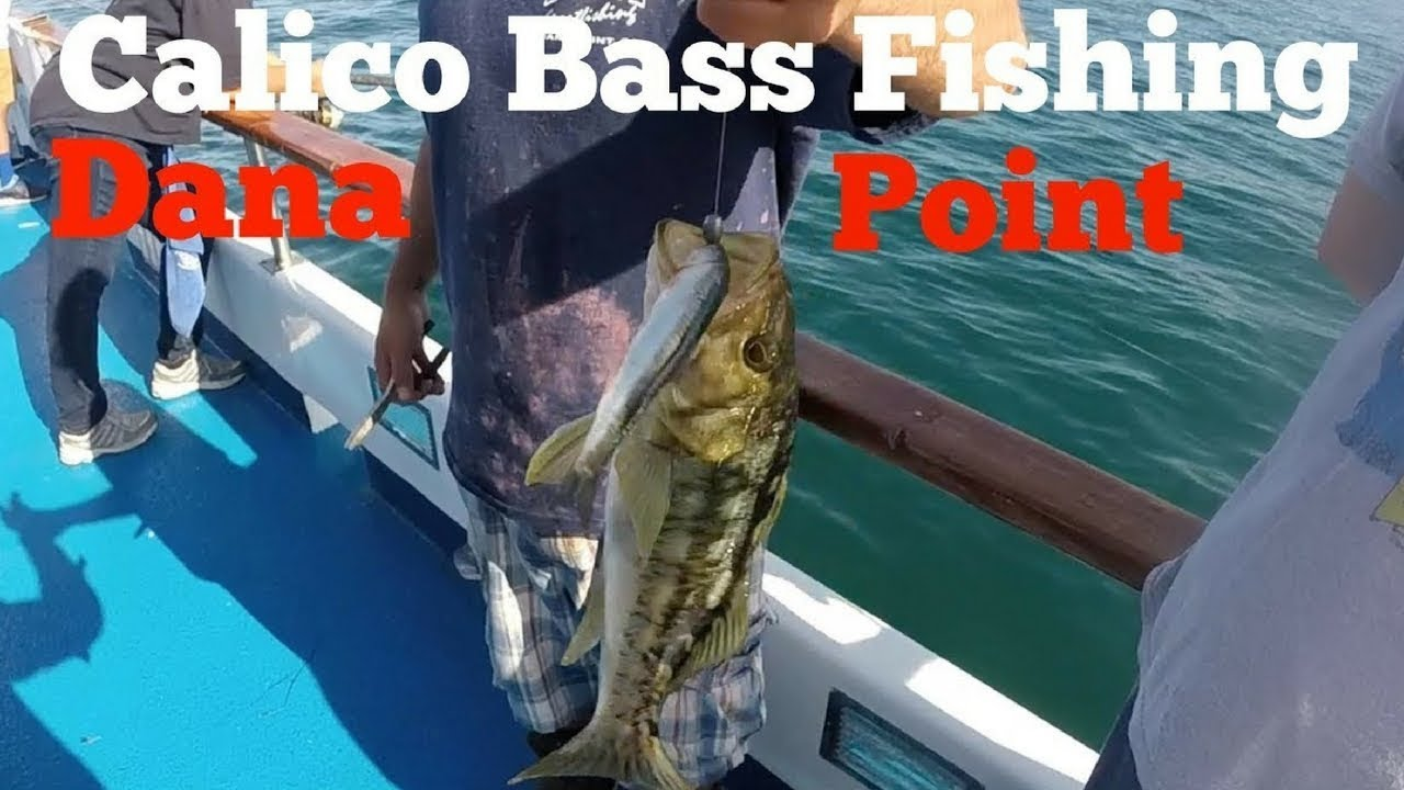 Calico bass fishing on the fury in dana point youtube for Dana point fishing