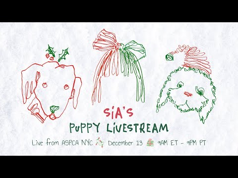 Puppies Are Forever Livestream at the ASPCA in NYC