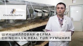 Chinchilla Real Fur | Шиншилловая Ферма | Румыния | Успешные Агропроэкты - СУБТИТРЫ
