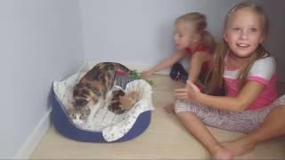 Дети и котята в прямом эфире