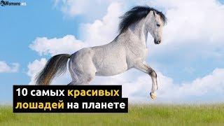Топ 10 самых красивых лошадей на планете | The 10 Most Beautiful Horse Breeds in the World!