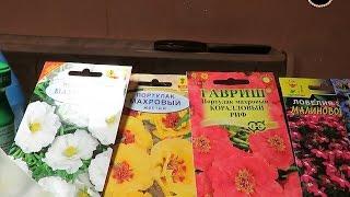 Сеем очень мелкие семена цветов (лобелию и портулак). Lobelia and purslane (flowers).(, 2016-03-24T04:34:29.000Z)