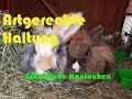 Kaninchen Artgerechte Haltung  Mp3 - Mp4 Download