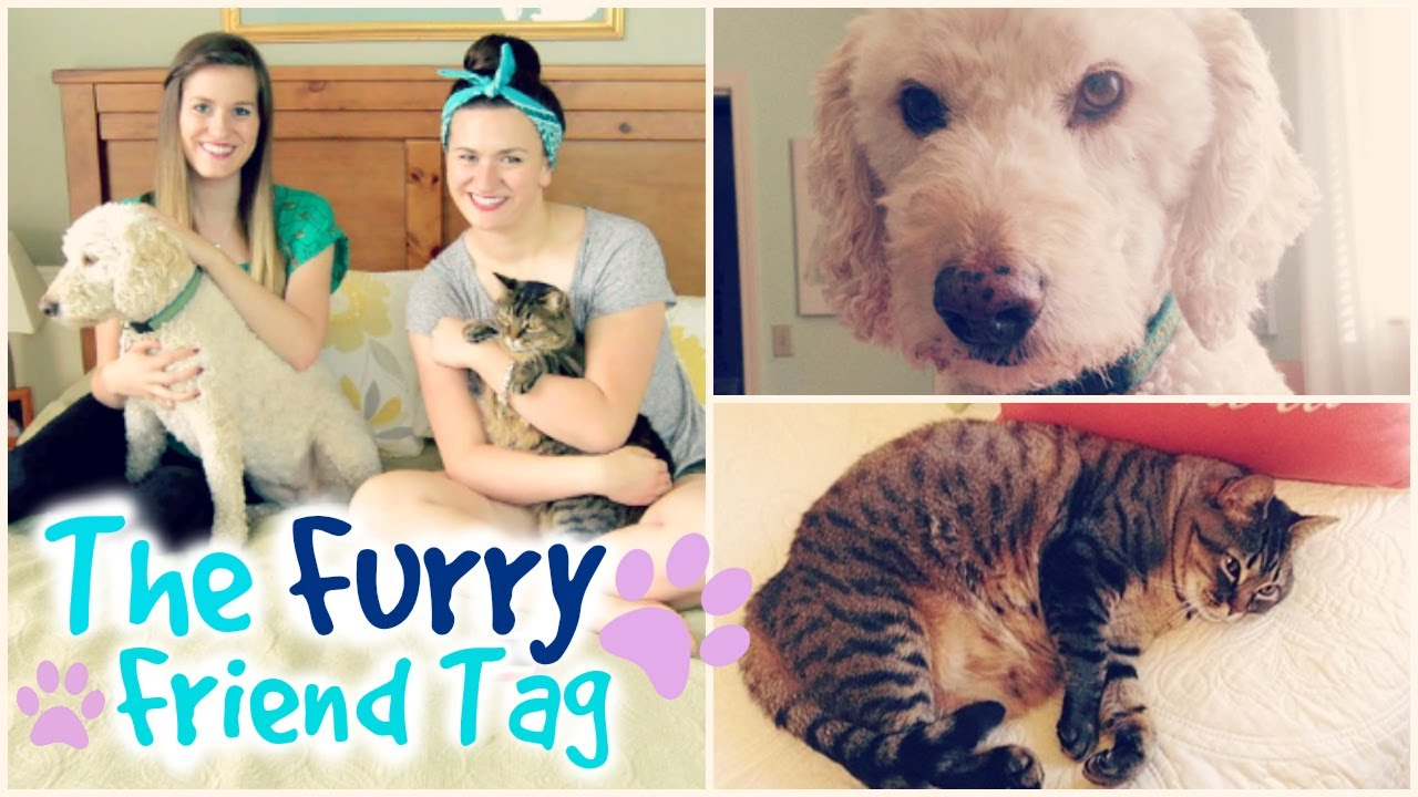 furry friend tag meet all my pets