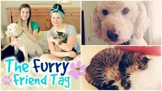 The Furry Friend Tag: Meet Tonks and Luna! Thumbnail