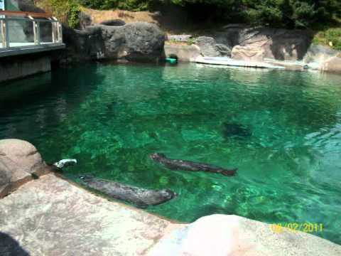 FAMILY DAY AT THE ZOO.wmv