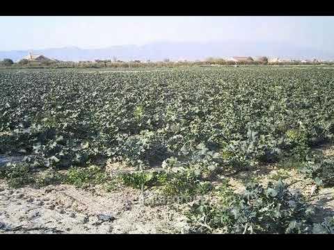 € 203022 | Land | Murcia, Spain | MapFlagged