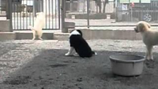 宮城県大河原にある警察犬訓練所にいた子犬たちです。