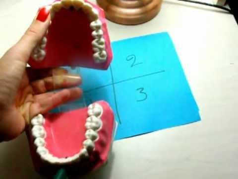 identificarea dintilor