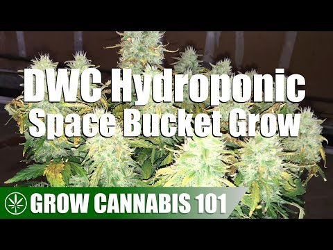 Timelapse DWC Hydro Space Bucket Automatic Seed Grow