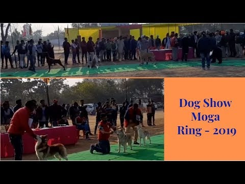 Dog Show Moga Ring - 2019