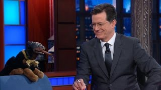 Triumph The Insult Comic Dog Is Now An Incisive-Political-Humor Dog