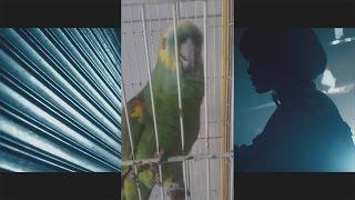 Eminem's Feathered Duet Partner