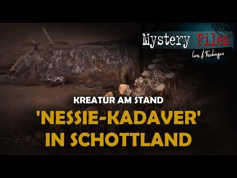Seltsame Kreatur am Strand: Kadaver von Nessie in Schottland angespült?