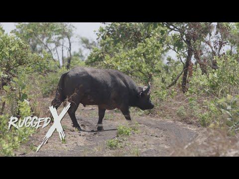 Kabooby Cape Buffalo