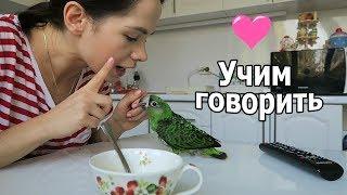 VLOG: Один день с Рексом / Жизнь попугая 2 мес.