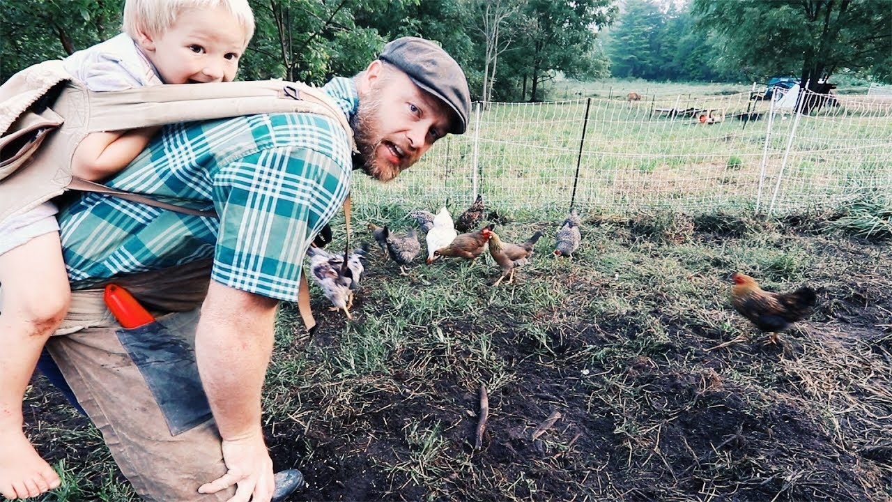 how-i-get-chickens-pigs-to-till-my-garden