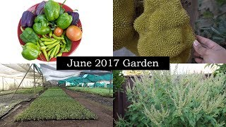 June Garden, Vacation Gardening Moments From India & More!