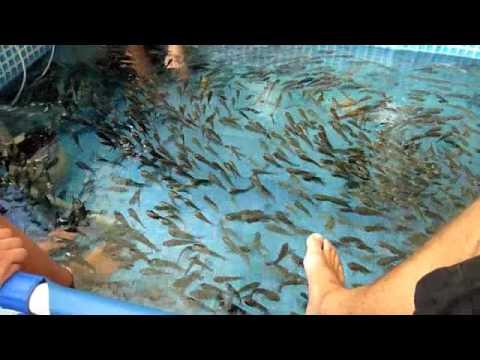 Fish foot spa kuala lumpur malaysia youtube for Fish foot massage