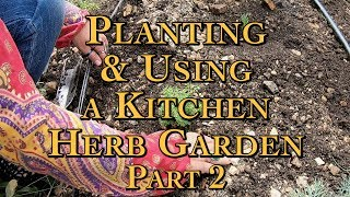 Planting & Using a Kitchen Herb Garden Part 2