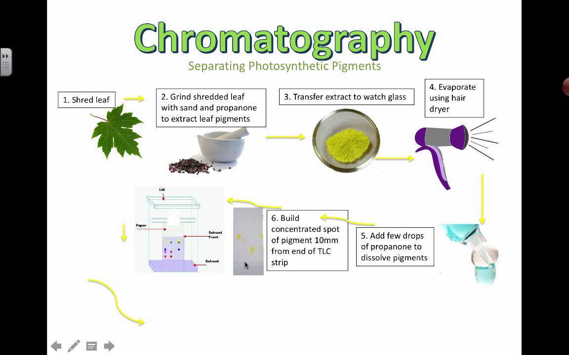 chromatography plant pigments