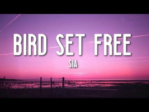 Bird Set Free - Sia (Lyrics) 🎵