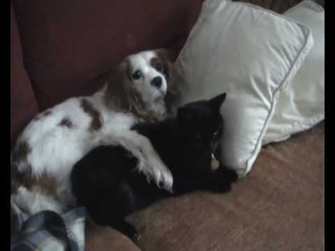 Cuddling With Cat