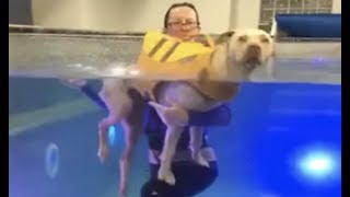 LIVE: Paralyzed Dog Swims at Water Therapy Session | The Dodo LIVE thumbnail