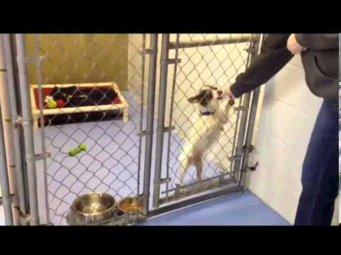 Aspca Dog Barking