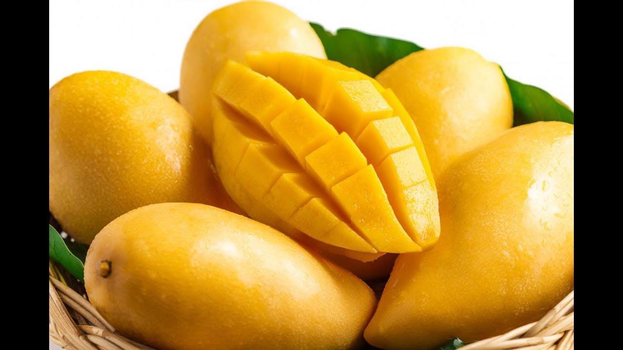 mango fruit companies
