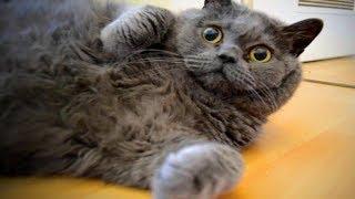 Cute Fat Cats 😻😹 Funny Fat Cats (Full) [Epic Life]