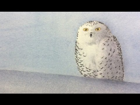 How To Paint An Owl With Watercolor Make An Original