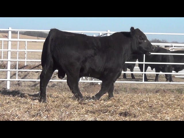 Express Ranches Lot 159