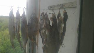 Фидерная рыбалка на карася весной (РЫБАЛКА НА ФИДЕР)