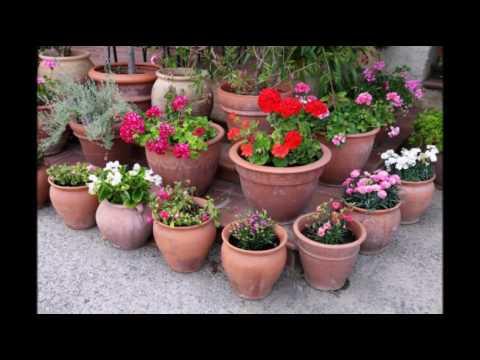 Цветы, клумбы на даче