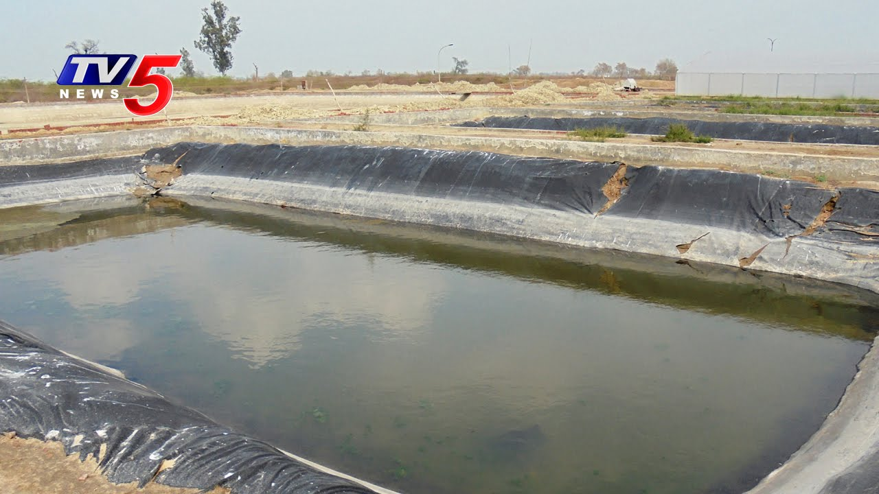Farm ponds farming nizamabad annapurna tv5 news for Koi pond india
