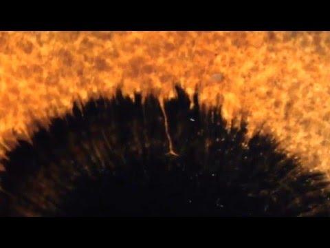 Menocchio Teaser Trailer 2 HD