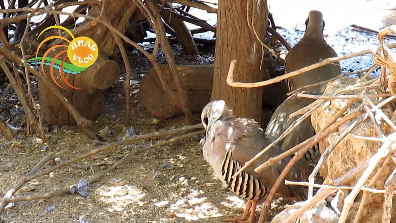 Hayvanlar Alemi (animal kingdom / daily vlog )