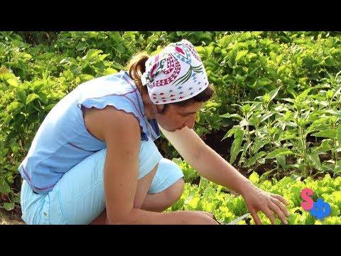 ЖЕНЩИНА просто вышла в огород нарвать укропа – и ПРОПАЛА