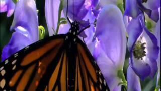 урок бабочки пример успеха.mpg