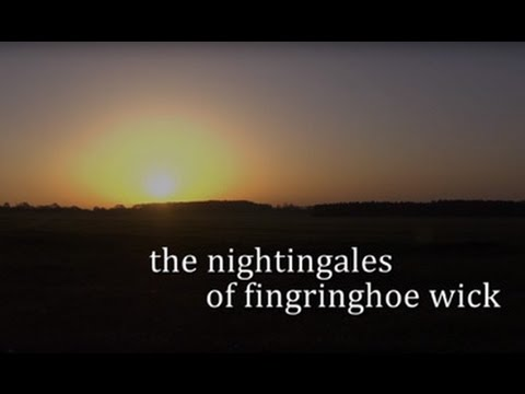 The Nightingales of Fingringhoe Wick