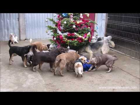 Carmen - Shelter Dogs Get Visit From Santa With Treats Every Year And Its The Cutest