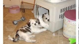 Potty Training Dogs.how To Potty Train A Dog.how To Potty Train Your Puppy.potty Training For Dogs