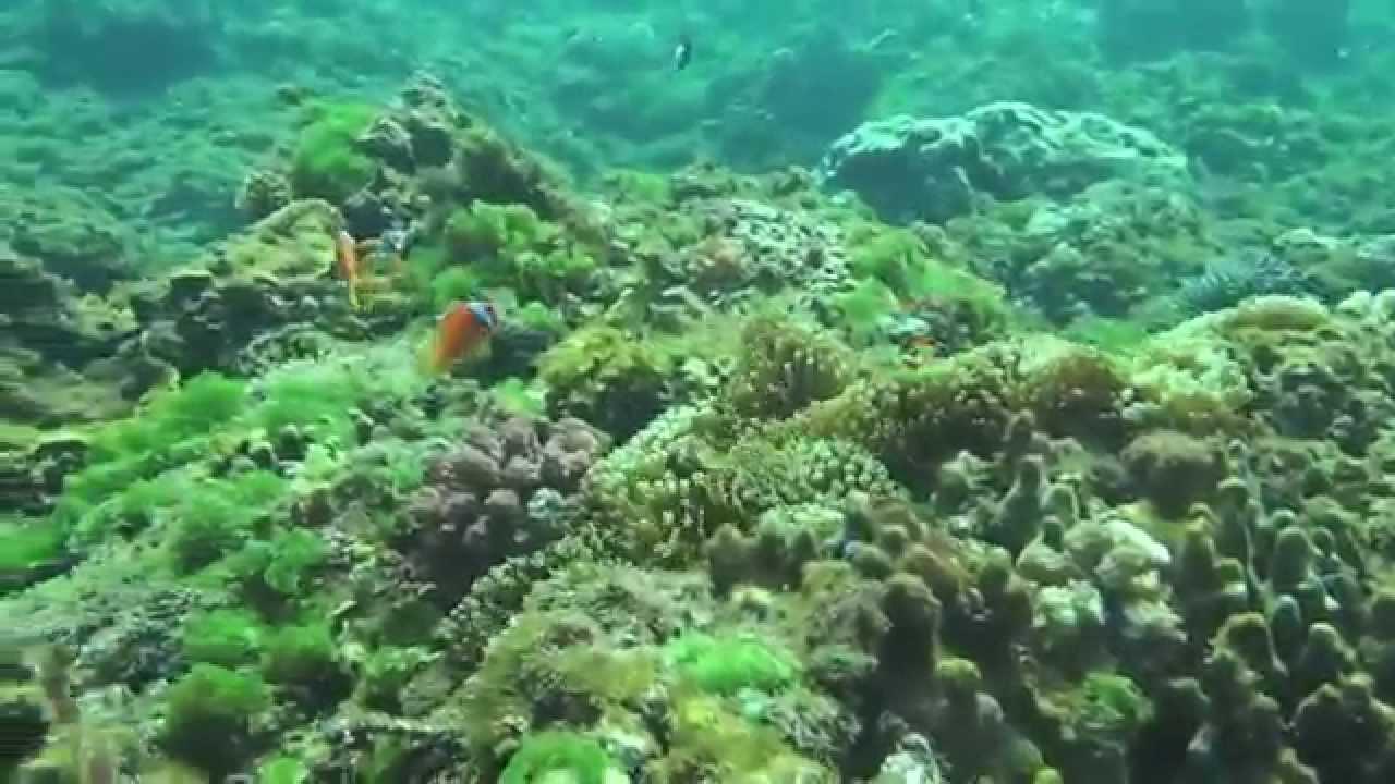 墾丁萬里桐-水到魚行浮潛館 . - YouTube