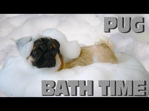 Приколы - Канал Смешное видео - Собака лает попой